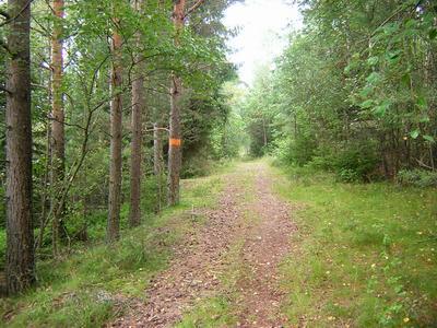 Skåneleden skov nær Osby vest